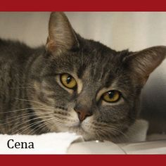 Cena is located at the Quincy animal shelter.  There phone number is 617-376-1349  There location in 56 Broad street  Tuesdays and Thursdays 6:00pm-8:00pm  Fridays 4:00pm - 6:00pm  Saturdays 10:00am- 4:00pm         Please Adopt Today