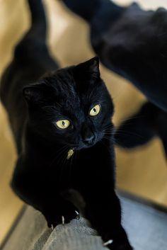 How I get my kicks    beautiful black cat