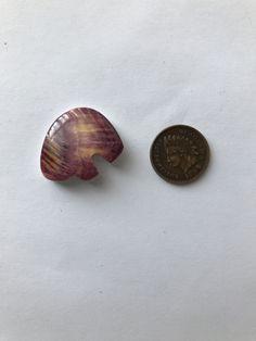 Spiny Oyster Shell Bear