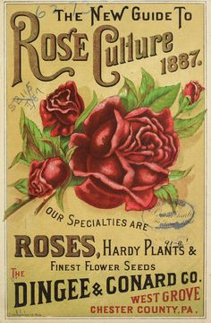 The Dingee & Conard Co - Our new guide to rose culture : 1887 Vintage Labels, Vintage Cards, Vintage Signs, Garden Catalogs, Seed Catalogs, Vintage Seed Packets, Garden Labels, Seed Packaging, Garden Images