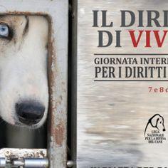 La Lega nazionale per la difesa del cane (Lndc) ha promosso a dicembre questa petizione per la tutela degli animali ospiti dei canili. Firma e diffondi.