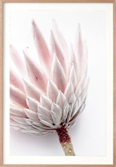 King Protea I Print. A beautiful floral photographic print by professional photographer Dani Burley of Love Your Space. Protea Art, Protea Flower, Felt Flower Bouquet, Felt Flowers, South African Flowers, Wall Art Prints, Poster Prints, Grey Wall Decor, King Protea