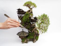 Are you interested in getting an indoor bonsai tree? If you are, then you definitely need to learn about how you can take good care of your tree. Bonsai Trees For Sale, Bonsai Tree Types, Bonsai Tree Care, Indoor Bonsai Tree, Plantas Bonsai, Garden Terrarium, Bonsai Garden, Succulent Planters, Hanging Planters