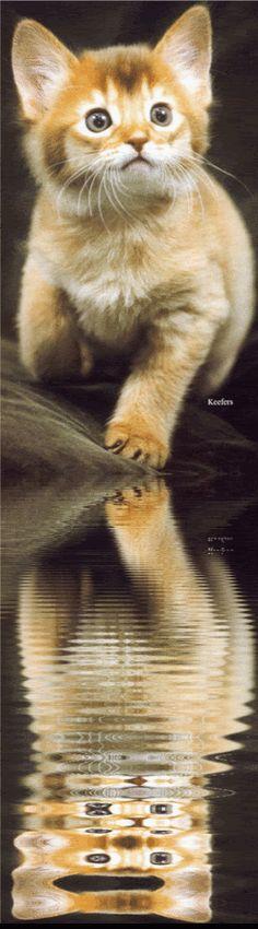 Animated Gif Animals | Animated Animals, Animated Graphics, Beautiful Animals, Keefers photo ...