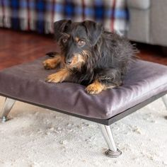 Bailey: Small Dog Bed. Ideal for Teacup Yorkies & Chihuahuas, Maltese poodle. Size 49.5cm x 50 cm x 22 cm This Luxury dog bed will become part of your furniture, and will look great in any Lounge, Bedroom or TV Room, so that your furry friend can be part of the family. Delivery cost in South Africa are included. Chihuahuas, Yorkies, Maltese Poodle, Dog Beds For Small Dogs, Teacup, Craftsman, South Africa, Delivery, Lounge