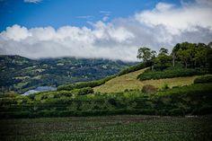 Costa Rica - coffeelandscape in the morning