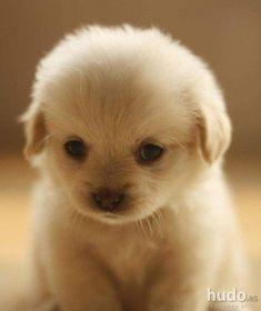 Resultado de imagen para perritos tiernos