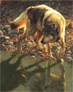 White Wolf: Greg Beecham - American Artist of the Wild West. Favorite painting of all time. Wildlife Paintings, Wildlife Art, Animal Paintings, Horse Paintings, Pastel Paintings, Be Wolf, Wolf Love, Husky, Cane Corso