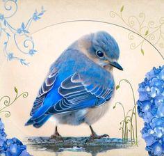 ideas for blue bird illustration drawings Bluebird Tattoo, Tattoo Bird, Tattoo Animal, Motifs Animal, Art And Illustration, Tier Fotos, Bird Drawings, Bird Pictures, Little Birds