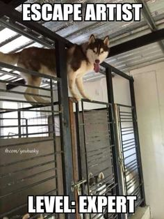 Do you have an escape artist? Check out our list of the best escape-proof crates! https://www.animalhub.com/escape-proof-dog-crate/