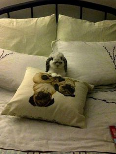 bunny in bed