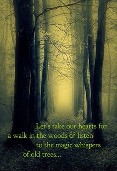 Let us take our hearts for a walk in the woods, and listen to the magic whispers of old trees....