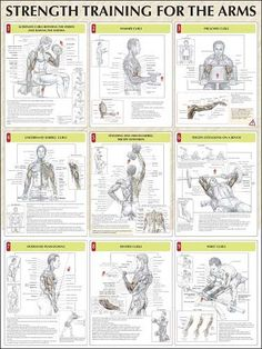 Increase Biceps Fast and Easy