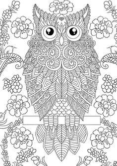 owl adult coloringcoloring pageszentanglesbig kidsdoodlesanimal