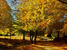 Beautiful colors of the fall. Hateg, Romania #fallphotography #fallcolors #romania #october #perfectplace