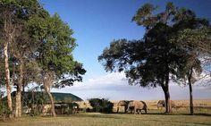 Governors' Camp, Masai Mara