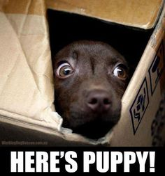 The shining - puppy style!