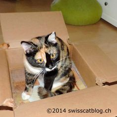 Secret Paws 7 : the box is very cool too !