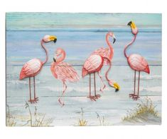 Pet Birds, Flamingo, Vietnam, Animals, Flamingo Bird, Animales, Animaux, Flamingos, Animal