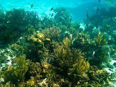 Cayman coral by TiffyALee, via Flickr