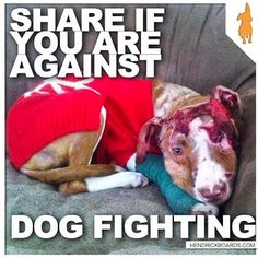 End aniamls fighting and abuse. please repin if you agree