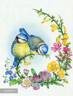 Yooniq images - Two young blue tits and wild flowers
