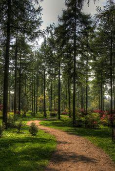 Westonbirt Arboretum, Gloucestershire, England