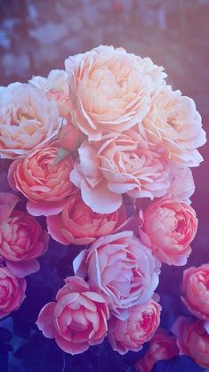 Обои iPhone wallpaper flowers