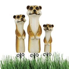 The Meerkat Garden Stake Statue by Design Toscano. $12.95. Design Toscano exclusive. Hand painted. Cast in quality designer resin. QL956809 Positioned to pop up in lawn, garden, or wherever you'd welcome a bit of whimsy, the stylized faces of our adorable meerkats lend a smile whatever the season! Set atop metal stakes, our garden statues are cast in quality designer resin and hand-painted in natural tones exclusively for Toscano. Features: -Set of 3. -The Meerka...