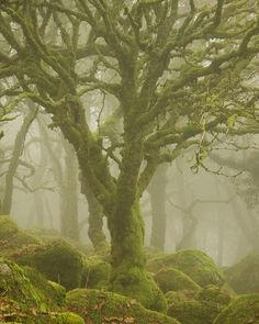 Trees in the mist, Dartmoor National Park, England (by Duncan George).