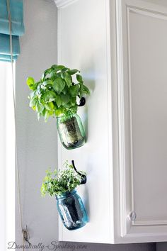 Hanging Fresh Herbs in Mason Jars - Create easy access to fresh herbs while adding color to your kitchen! A super easy DIY project that makes a HUGE impact.