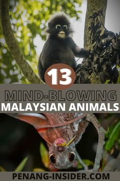 Malaysia Itinerary, Malaysia Travel Guide, Luang Prabang, Best Places To Travel, Cool Places To Visit, Laos, Travel Inspiration, Travel Ideas, Travel Tips