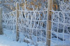 Fascinating ice crystals at Neshaugen Norway Winter, Ice Crystals, Frost, Snow, Cold, Pictures, Photography, Beautiful, Photos