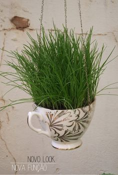 PET GRASS: turn old teacup into hanging cat or dog grass for snacking and digestion aid with this cute DIY.