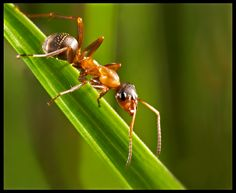 ant on grass