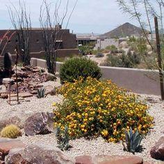 desert southwest landscaped front