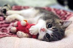 Cuddle buddy.