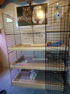 Totally wire-walled multi-level bunny-rabbit pen w/ wood flooring. habitat/cage/enclosure/pen/home/condo Diy Bunny Cage, Bunny Cages, Rabbit Cages, Indoor Rabbit House, House Rabbit, Rabbit Pen, Pet Rabbit, Rabbit Habitat, Bunny Room