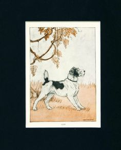 ANTIQUE Dog Print 1926 Wire Fox Terrier by Charles Livingston Bull