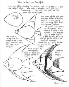 How to Draw Worksheets for Young Artist: How To Draw An Angelfish Worksheet. print it at my blog, http://drawinglessonsfortheyoungartist.blogspot.com/2013/08/how-to-draw-angelfish-worksheet.html