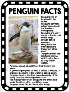 Activities - Math - Reading - Writing - Research - Science Penguins: Informational text, graphic organizers, and activities!Penguins: Informational text, graphic organizers, and activities! All About Penguins, Penguins And Polar Bears, Baby Penguins, Preschool Science, Science Activities, Preschool Winter, Polar Animals Preschool Crafts, Science Writing, Kid Science
