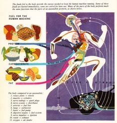 The Human Body: What It Is and How It Works, in Vibrant Vintage Illustrations circa 1959 – Brain Pickings