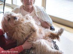Una giornata con un cane da pet therapy. Mi chiamo Toffy e sono un cane molto speciale, morbido, simpatico e allegro. Proprio per questo due volte...
