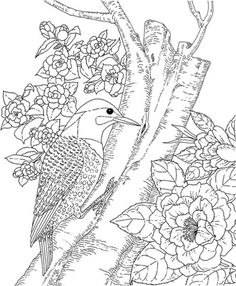 Yellowhammer And Camellia Alabama State Bird And Flower Coloring Page From Camellia Category Select From Printable Craftsfree