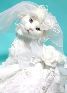 20 Cats in bridal costume