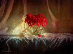 https://flic.kr/p/ABJ3xJ | Geranium Red Flowers ... | Have a happy weekend, my friends!:)