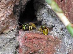 Bristol Pest Control: Bristol Wasp Control