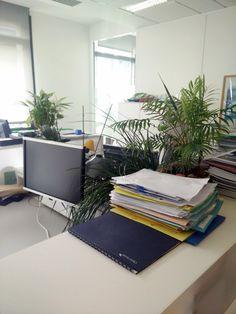 Jean-Marc et Bénédicte partagent un passion pour les plantes et on bien verdi leur bureau ! Ils occupent tous les deux des postes au sein de l'équipe Structuration des Programmes de Financement de Crédit Agricole S.A.