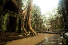 Angkor Wat - Ta Phrom, Cambodia @ 500px by Markus Rodatz