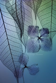 Story of leafs and flowers by Shihya Kowatari on 500px